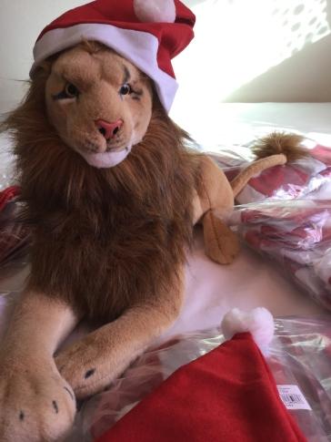 The peaceful Rob Nanninga lion