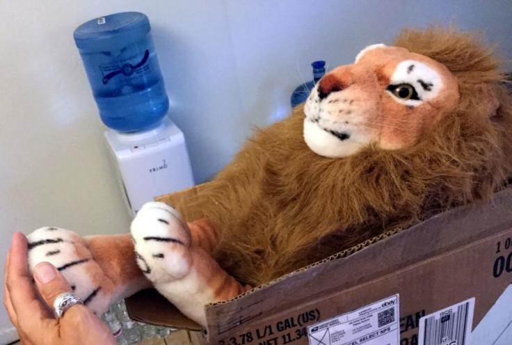 lion70