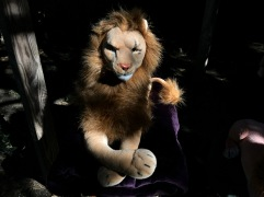 """""""Full"""": The Seventh Rob Lion"""