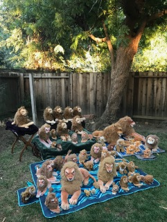 All Rob Lions in November 2017