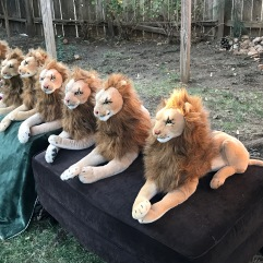 Septuplet Rob Lions