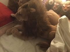 Soft Peace Bor Lion