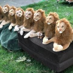 Rob Nanninga Lions