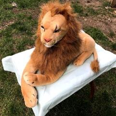 Octuplet Rob Nanninga, the Magician Lion