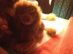 Rob lion small
