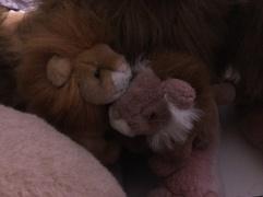 Rob small lions