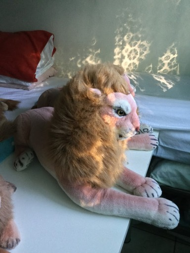 Rob Master Lion