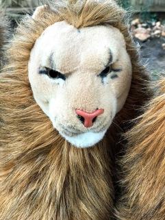 Jealous Rob lion