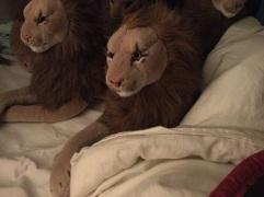 Rob Robust Lion