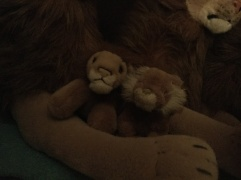 The small Rob Lions
