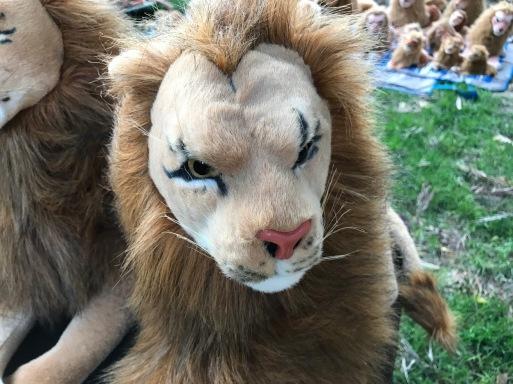 Rob Magician Lion