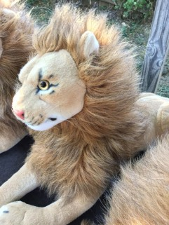 Rob Lion Young