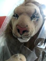 The Ninth Rob Nanninga Lion of the Multiples