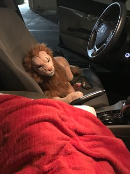 Rob Magician Lion accompanying me on the second trip to the Woodland Sleep Research Center