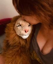 Rob Nanninga Magician Lion And Constantia