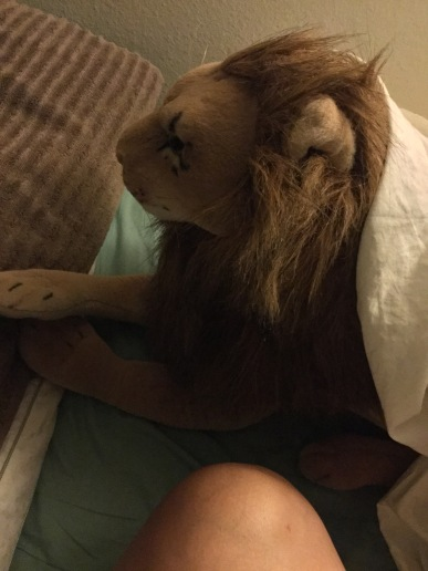 "On a morning in July 2019, I woke up like that. Rob Lion Full had ""stolen""the whole queen sized sheet. I didn't wrap him up like this, so I'd like to think, this was one of Rob's practical jokes."