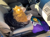Most Male Rob Lion and Whiskers companion to Rohnert Park, California